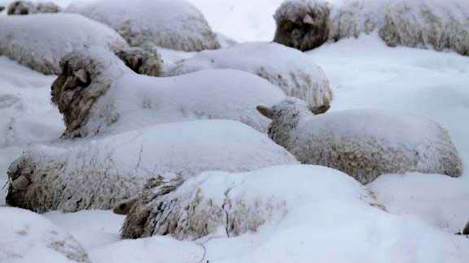 Image result for ANIMALUTE IN ZAPADA