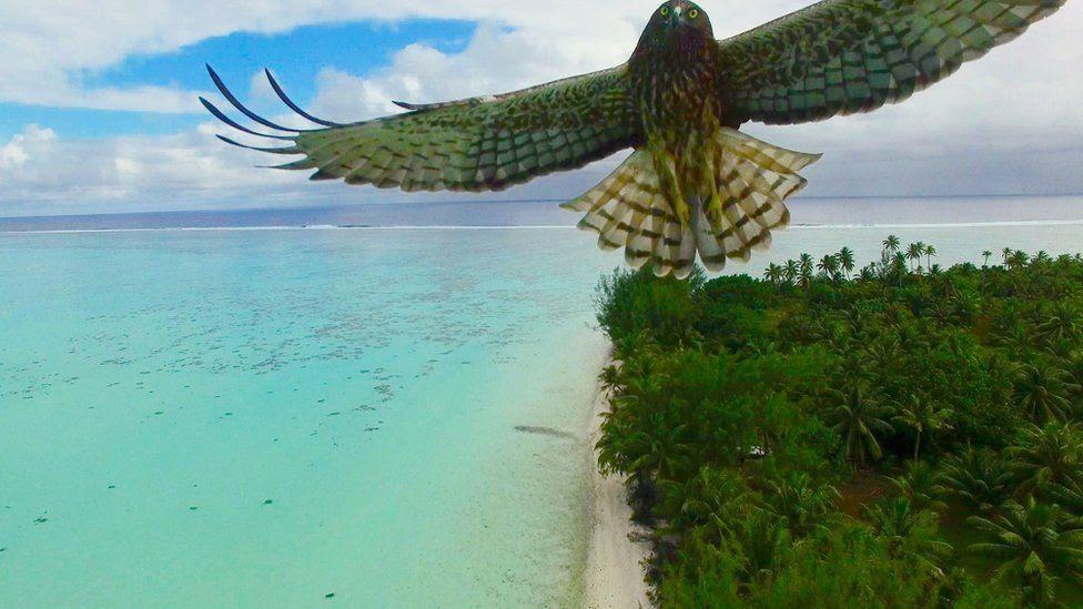 Pássaro voa sobre ilha