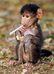 kabonfootprint-smoking-monkey