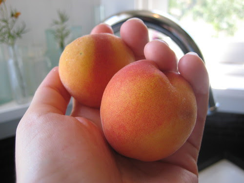 homegrown yellow peaches