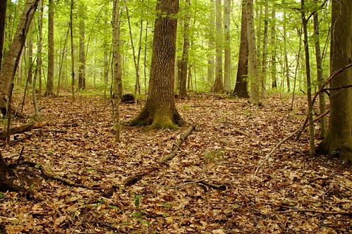 Wisteria Woods I