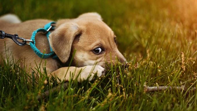 Consejos para ayudar al perro a superar el miedo a las personas