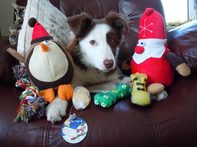 Christmas 2010 (7)