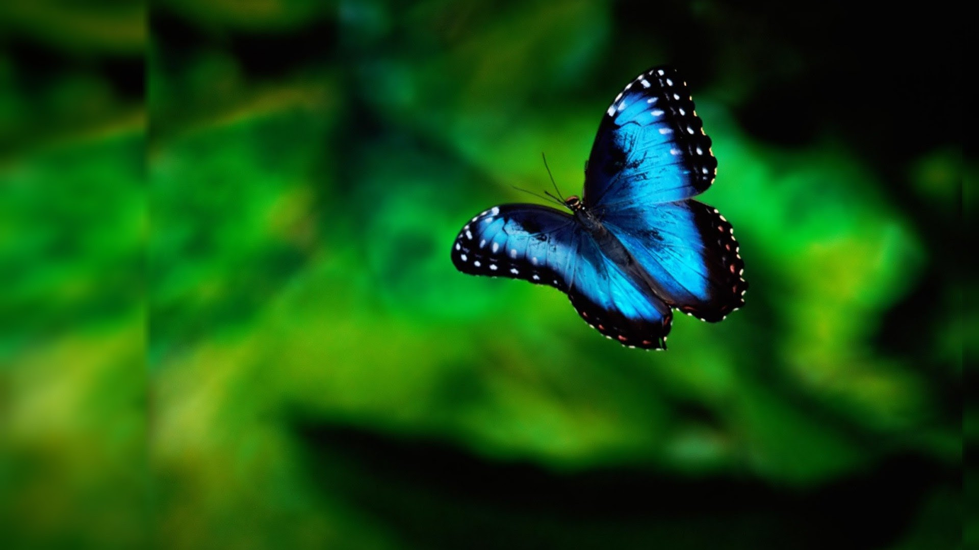 Black Butterfly Wallpaper (68+ images)