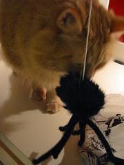 Jasper investigating the spider on the string