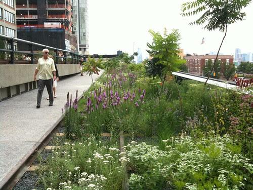 High Line Park wildflower beds