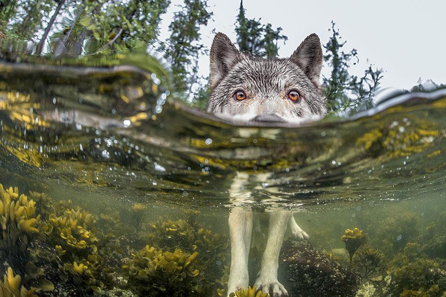 Something's Fishy, British Columbia Coast, Canada