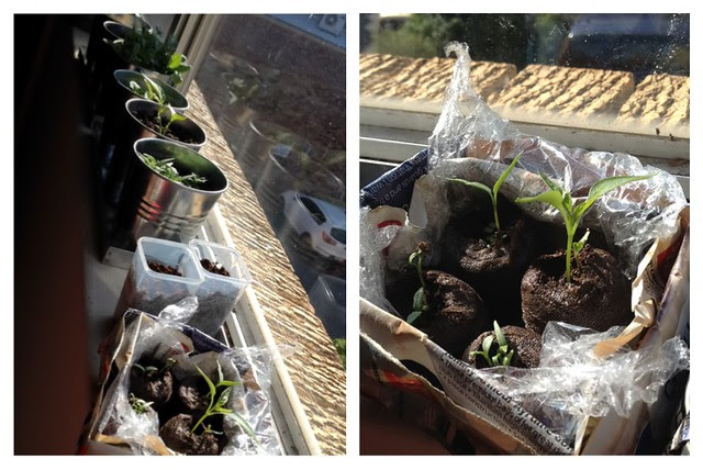 plants layout
