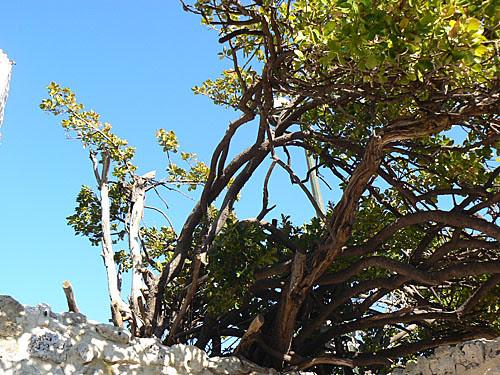 arbre sur ciel bleu.jpg