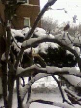 Baltimore snow Jan 2011