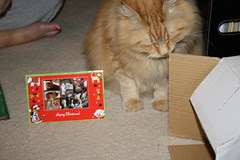 Jasper checking out the box