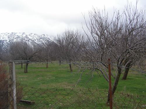 apple trees omalos hania chania
