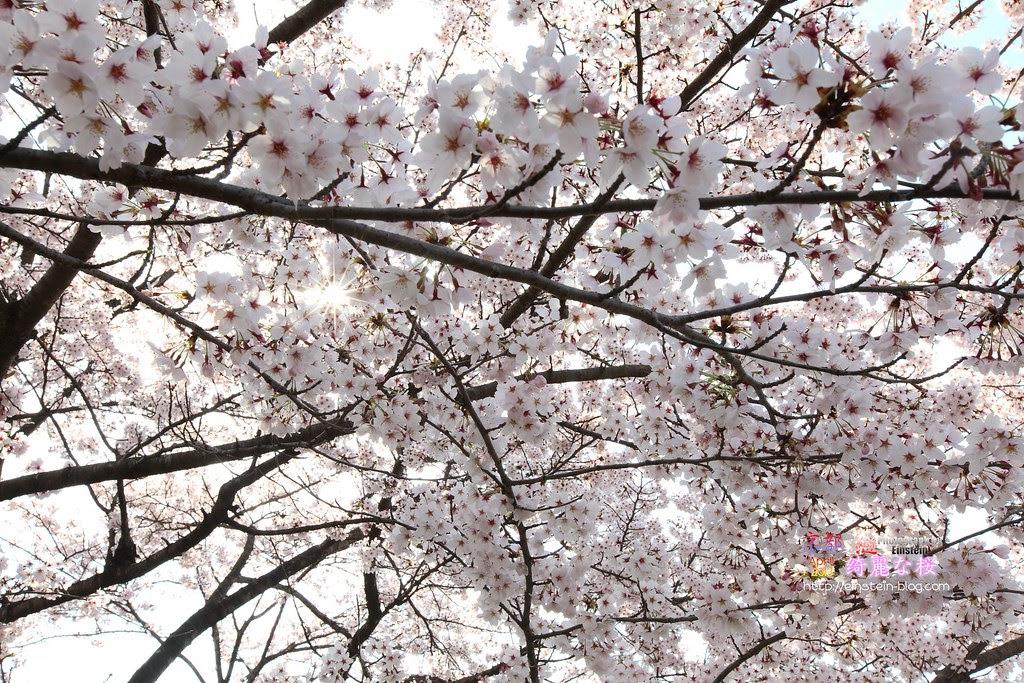 2013-04-04-08h28m13IMG_4155