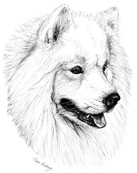 Samoyed Puppy Receipt Book   Print By Townsend