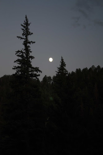 Moon and Pines, 2008