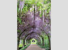 Wedding venue   Victoria, Australia   Alowyn Gardens   greenhouse   Wedding venues melbourne