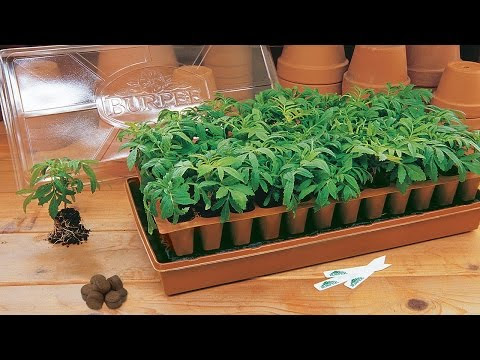 The Click and Grow basil starting kit (Photos)