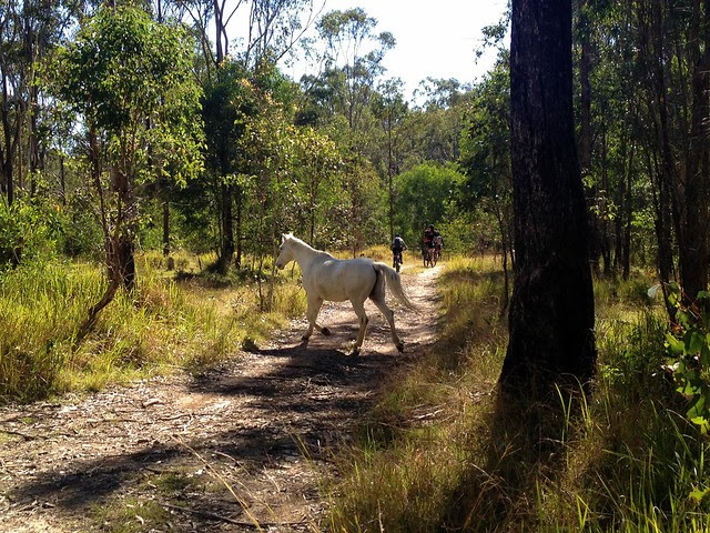 Horse on Borgan Road