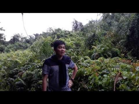 Khám phá rừng Vàm Hồ ở Ba Tri (Bến Tre)