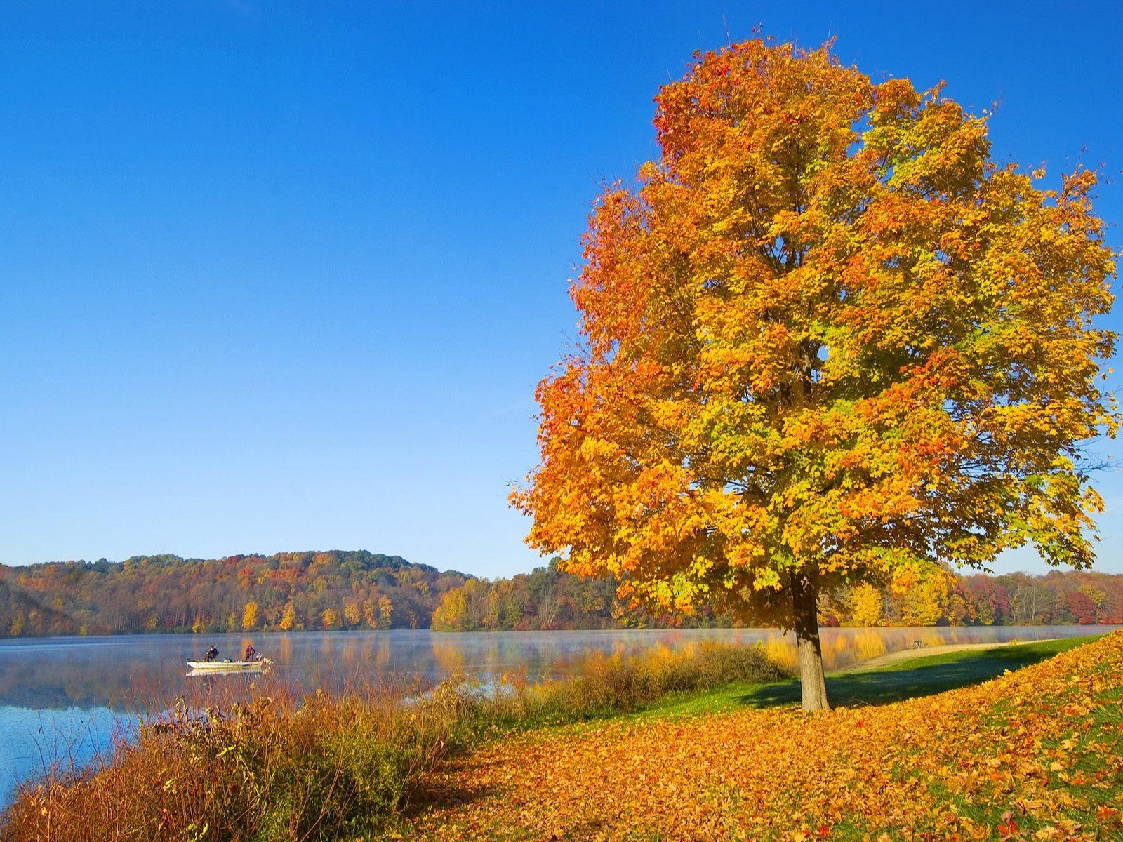 厚の秋の風景の壁紙 3 1600x1200 壁紙ダウンロード 厚の秋の風景