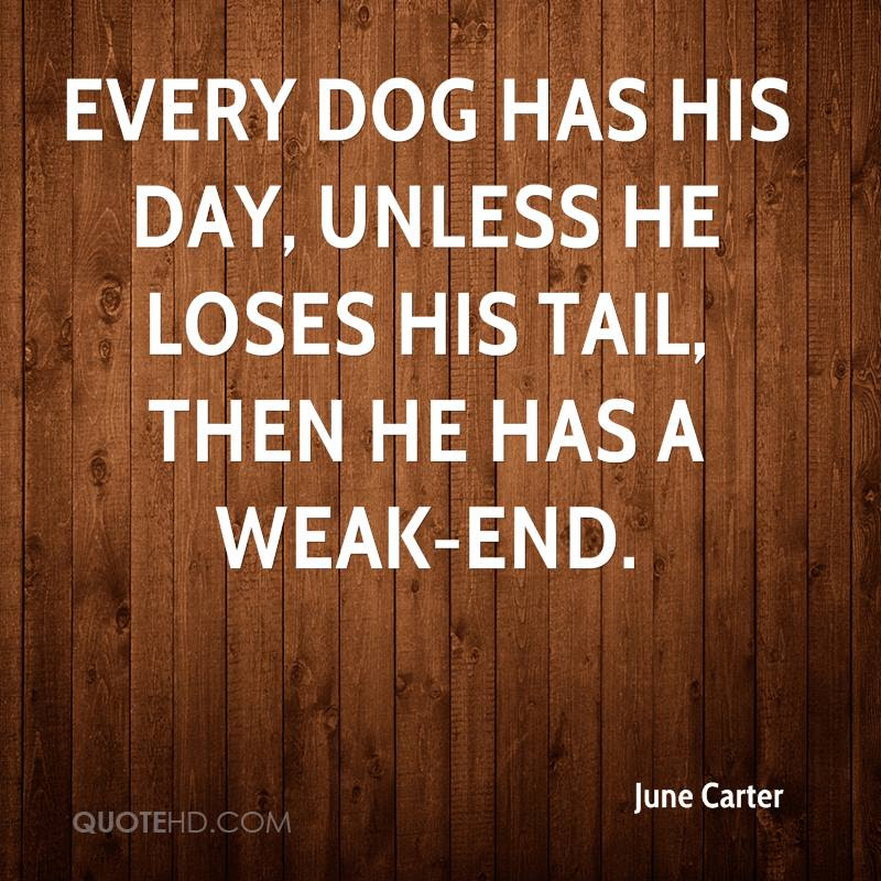 Every Dog Has His Day Unless He Loses His Tail Then He Has A Weak