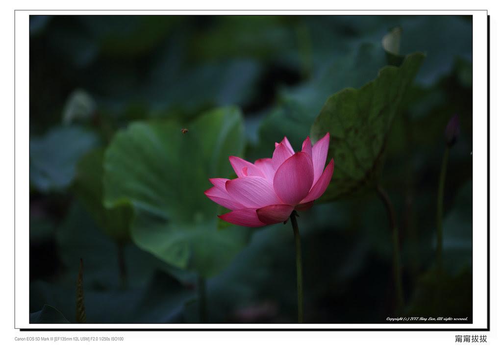 frame_BING1597