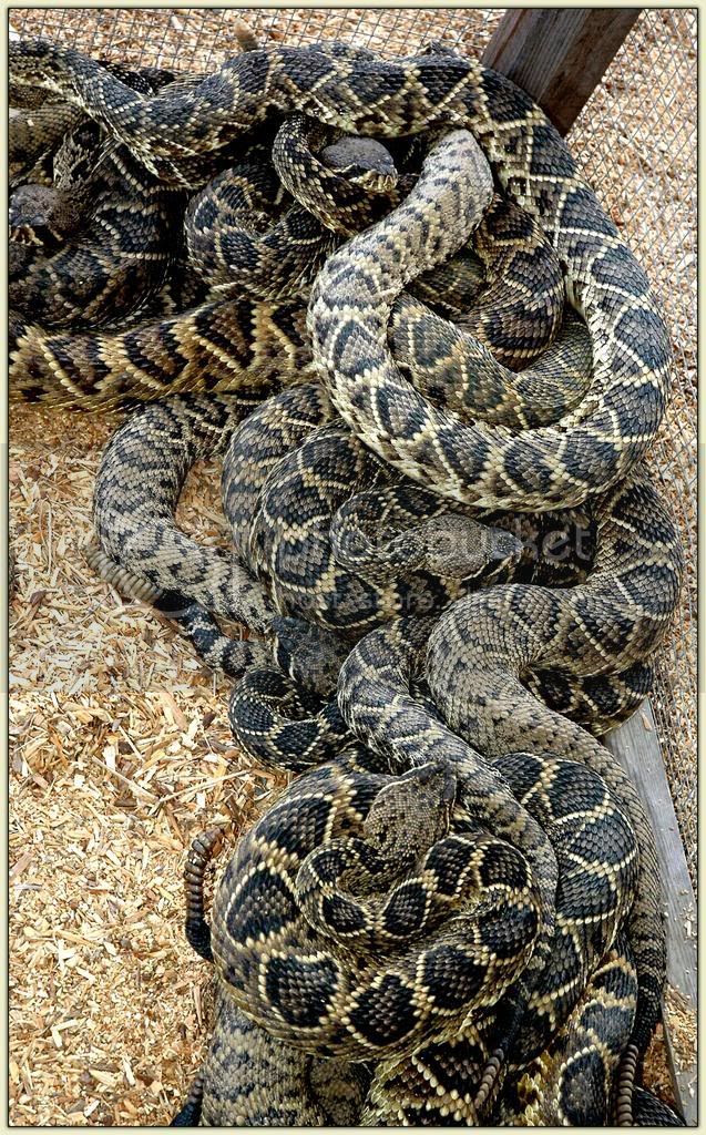 ...and Still More Snakes