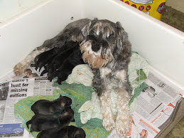 Nena and her babies