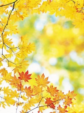 秋の花のスマホ壁紙 検索結果 [1] 画像数7175枚 壁紙  - 秋 スマホ 壁紙
