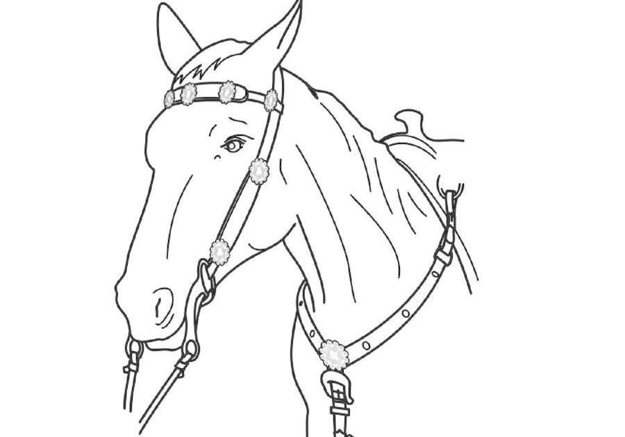 16 inspirational malvorlage pferd zum ausdrucken
