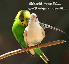 Malayalam Funny Love Image Archives Facebook Image Share