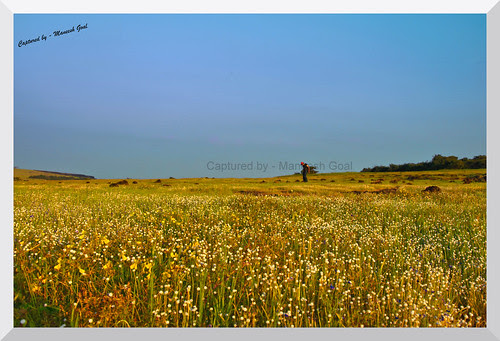 Kaas Plateau - let a million flowers bloom!