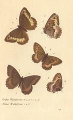 papillons d 17