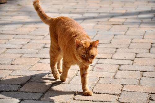 KittyPatrol