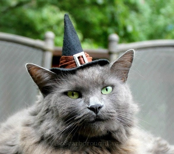 Cat Costume - Witch Hat - Good Witch