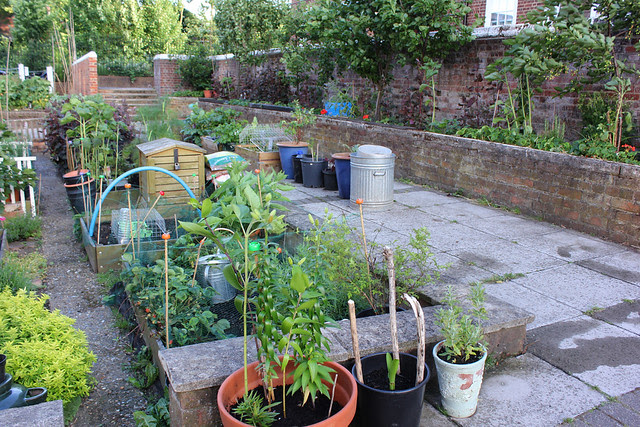 Veg and fruit garden June