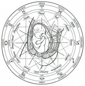 Uno de los dibujos en los libros de Randolph. Como se aprecia, las partes del cuerpo se relacionan con los signos del zodíaco y los elementos tierra, aire, fuego y agua.