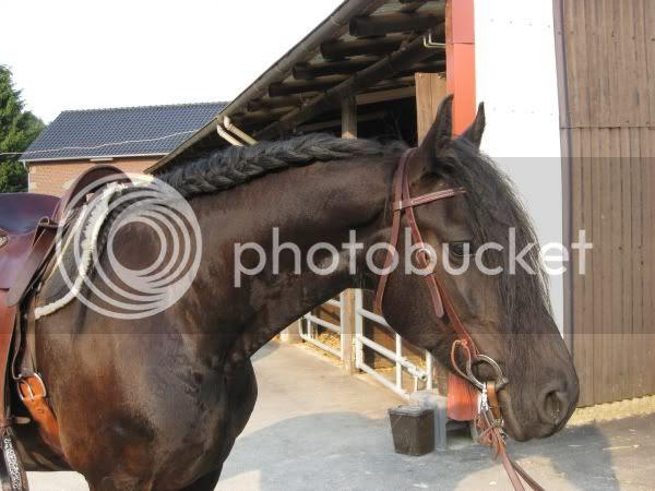 Coole Frisuren Für Pferde