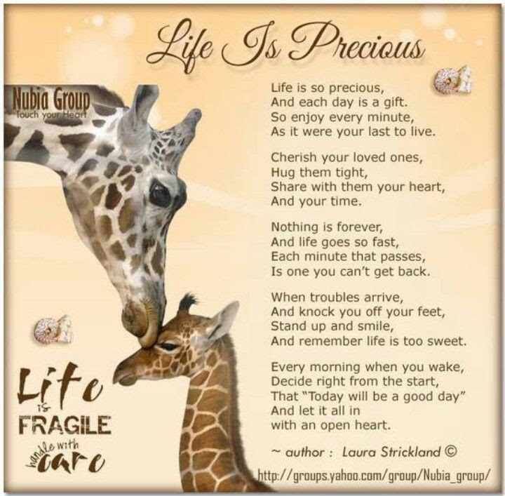 Quotes About Life Is Precious 204 Quotes