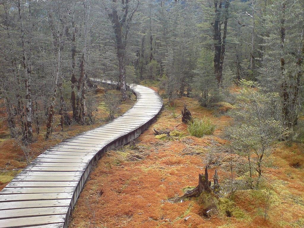 http://upload.wikimedia.org/wikipedia/commons/thumb/0/0b/Swampy_But_Pretty_Bog_In_Fiordland_NZ.jpg/1024px-Swampy_But_Pretty_Bog_In_Fiordland_NZ.jpg