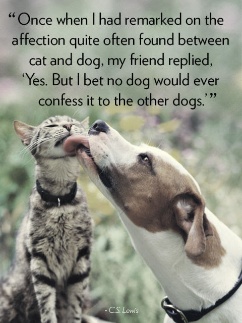 """Once When I had remarked on the affection quote often found between cat and dog, my friend replied, 'Yes. But I bet no dog would ever confess it to the other dogs.'"" C.S. Lewis"