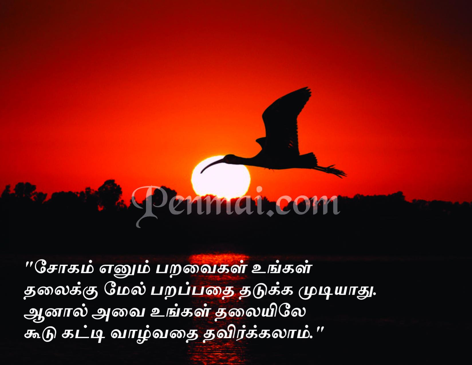 Vivekananda Motivational Quotes In Tamil QuotesGram