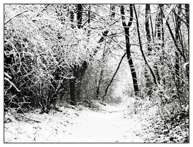 skozi gozd