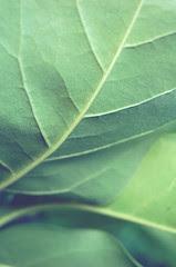 Nature story~ by Tja'Sha ♥