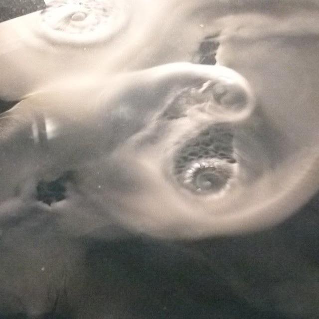 festes Kohlendioxid im Wasser