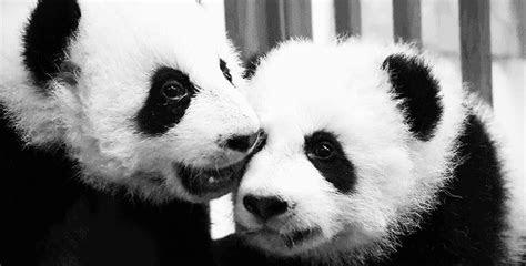 life  panda