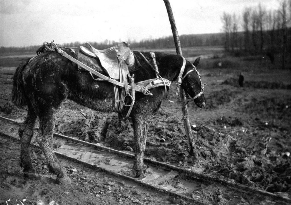 Os animais também lutaram na Primeira Guerra Mundial 19