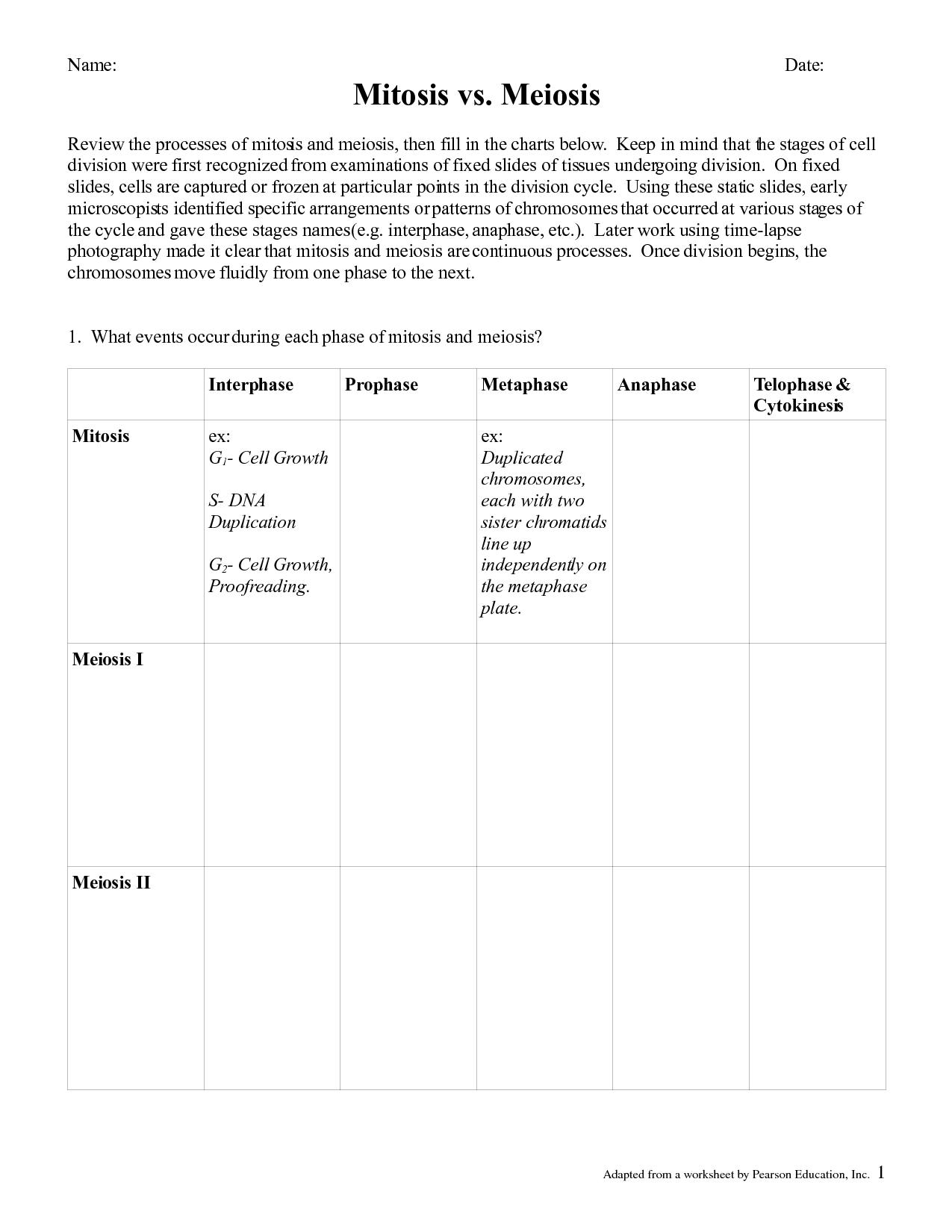 29 Meiosis Matching Worksheet Answer Key - Free Worksheet ...
