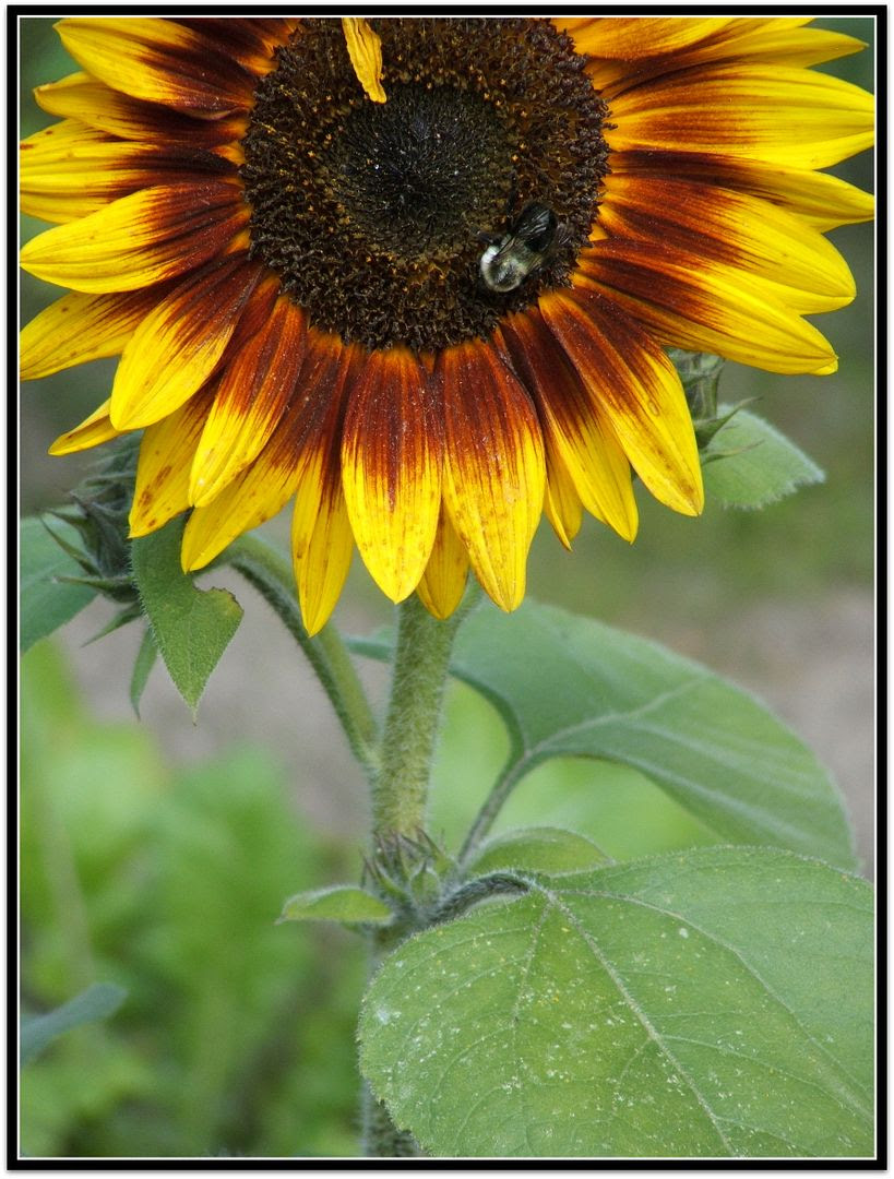 by Angie Ouellette-Tower for http://www.godsgrowinggarden.com/ photo DSCF9052_zpsdcd0tjq6.jpg