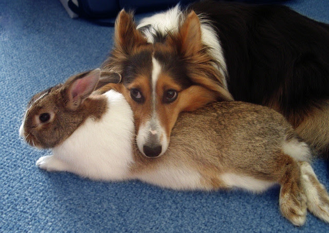 Friendship animals.  Collie and the rabbit